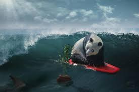 surfing panda